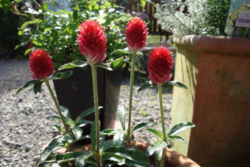 Junk Gardening - un stil în vogă de amenajare a grădinilor în Japonia