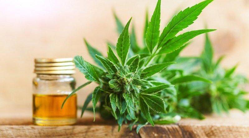Proprietăți medicinale ale uleiului CBD bine de știut